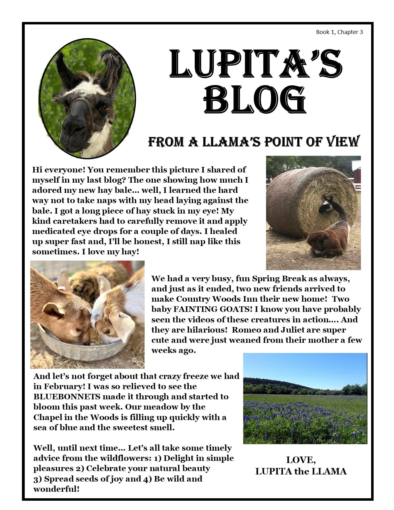Blog about barnyard life from a Llama's perspective