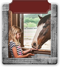 Amenities link - photo of blond little girl with black and white striped shirt feeding a horse by hand.