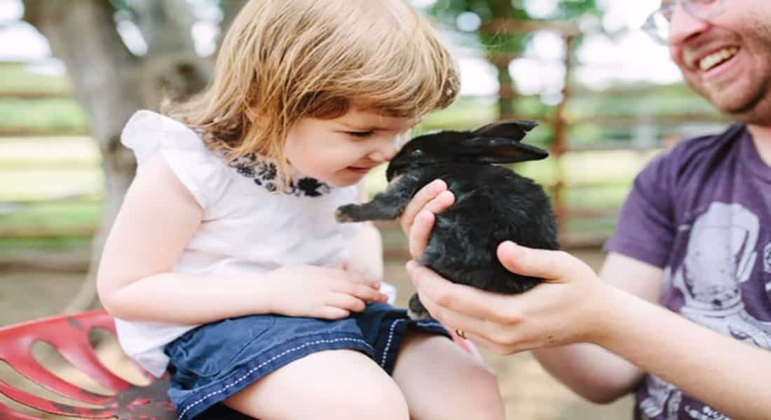 A young girl is nose to nose with a black bunny rabbit.