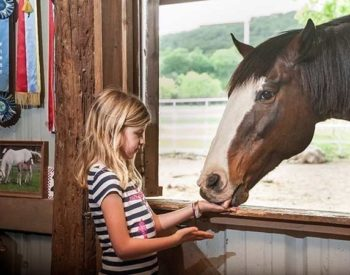 A blonde girl in a striped shirt feeds a chestnut horse with a white blaze.